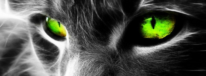 Green-eyed Cat with a Mysterious Look  {Animals Facebook Timeline Cover Picture, Animals Facebook Timeline image free, Animals Facebook Timeline Banner}
