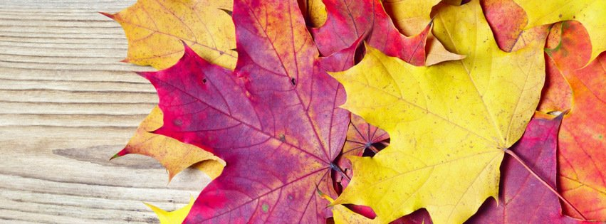 Fall Leaves {Scenic & Nature Facebook Timeline Cover Picture, Scenic & Nature Facebook Timeline image free, Scenic & Nature Facebook Timeline Banner}