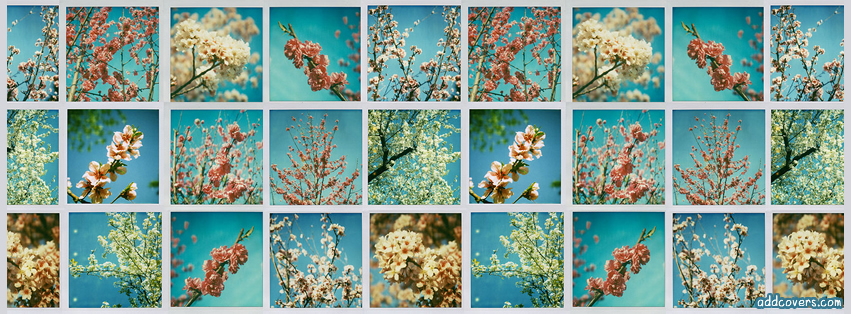 Flower Collage {Collages Facebook Timeline Cover Picture, Collages Facebook Timeline image free, Collages Facebook Timeline Banner}