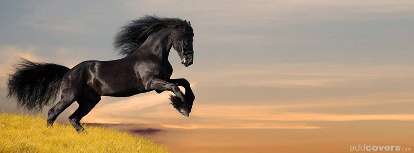 Black Horse {Animals Facebook Timeline Cover Picture, Animals Facebook Timeline image free, Animals Facebook Timeline Banner}