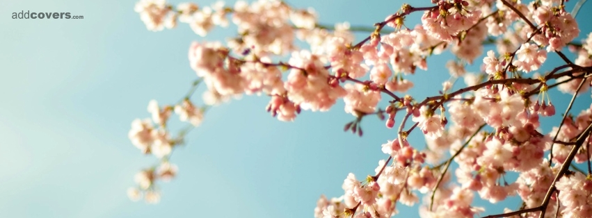 Pretty Tree Branch Facebook Covers