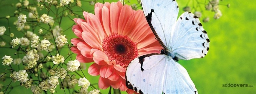 White butterfly & Flower {Flowers Facebook Timeline Cover Picture, Flowers Facebook Timeline image free, Flowers Facebook Timeline Banner}