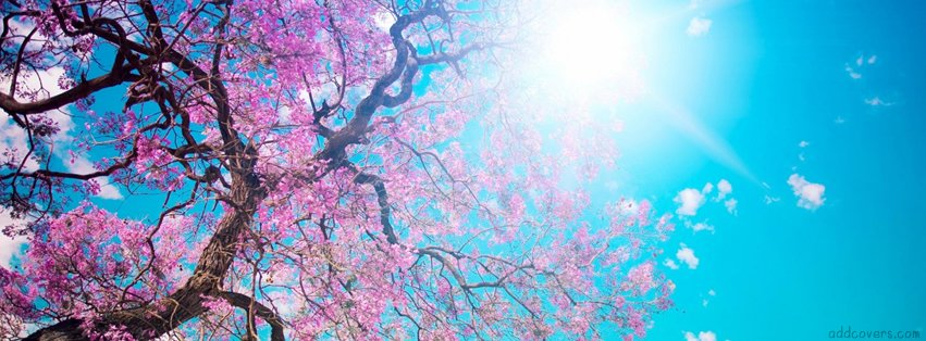 spring nature facebook covers aaub30jvr6uylv.jpg