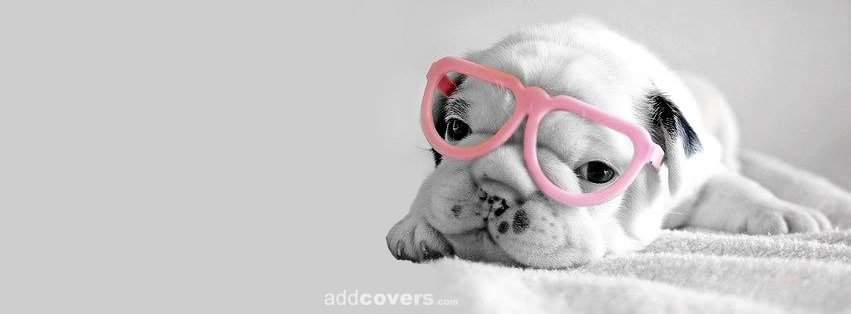 Puppy Glasses {Animals Facebook Timeline Cover Picture, Animals Facebook Timeline image free, Animals Facebook Timeline Banner}