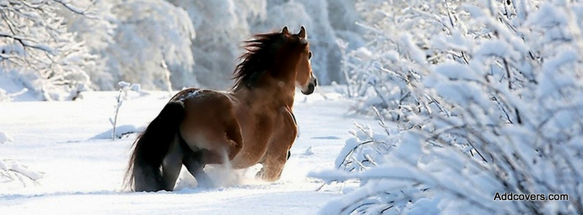 in the Snow {Animals Facebook Timeline Cover Picture, Animals Facebook ...