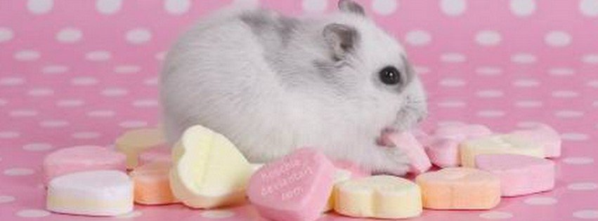 Cute Hamster {Animals Facebook Timeline Cover Picture, Animals Facebook Timeline image free, Animals Facebook Timeline Banner}