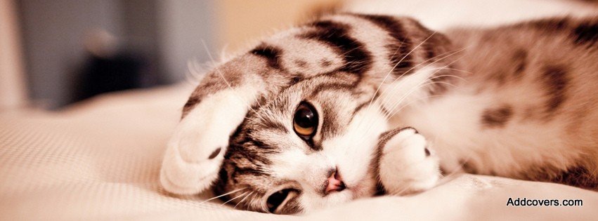 Cute Sleepy Cat {Animals Facebook Timeline Cover Picture, Animals Facebook Timeline image free, Animals Facebook Timeline Banner}