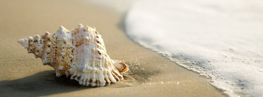 Seashell on the beach {Scenic & Nature Facebook Timeline Cover Picture, Scenic & Nature Facebook Timeline image free, Scenic & Nature Facebook Timeline Banner}