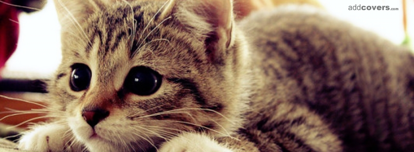 Cute Little Kitty Facebook Covers