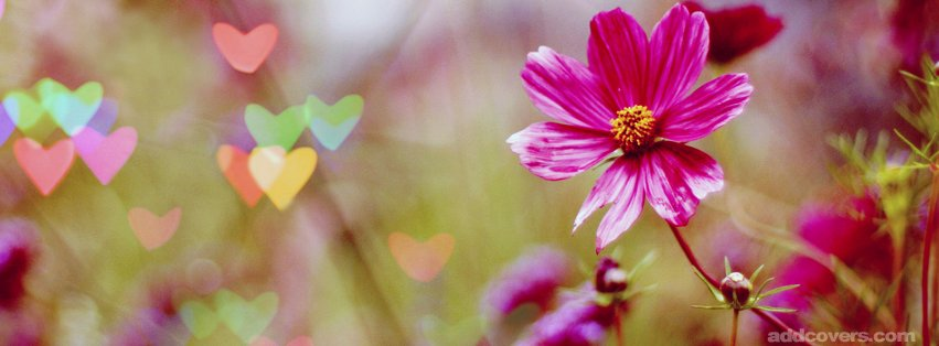 Cute Heart Flowers {Flowers Facebook Timeline Cover Picture, Flowers Facebook Timeline image free, Flowers Facebook Timeline Banner}