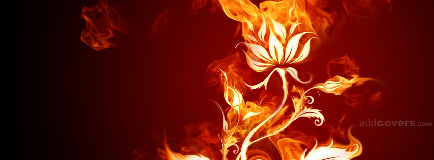 Fire Flower {Colorful & Abstract Facebook Timeline Cover Picture, Colorful & Abstract Facebook Timeline image free, Colorful & Abstract Facebook Timeline Banner}