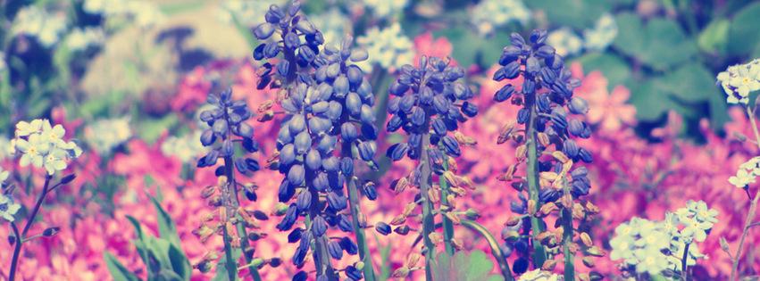 Purple Flowers {Flowers Facebook Timeline Cover Picture, Flowers Facebook Timeline image free, Flowers Facebook Timeline Banner}