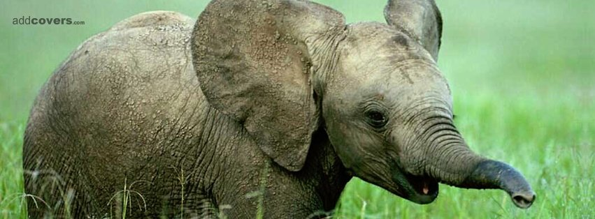 Baby Elephant {Animals Facebook Timeline Cover Picture, Animals Facebook Timeline image free, Animals Facebook Timeline Banner}