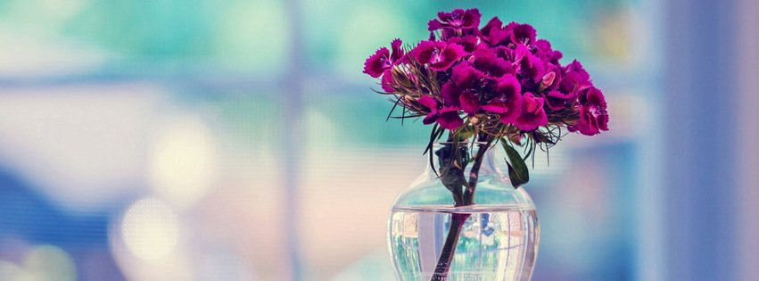 Beautiful Purple Flower Facebook Cover Photo