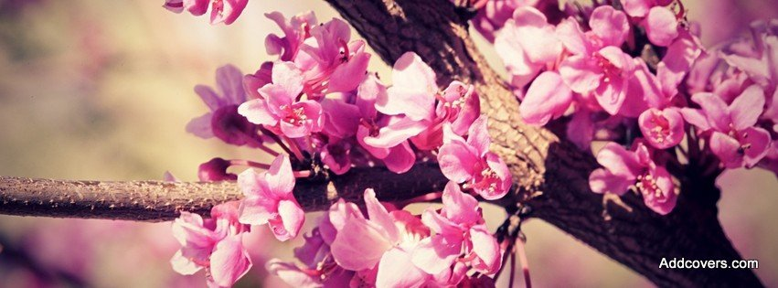 Pink Cherry Blossom {Flowers Facebook Timeline Cover Picture, Flowers Facebook Timeline image free, Flowers Facebook Timeline Banner}