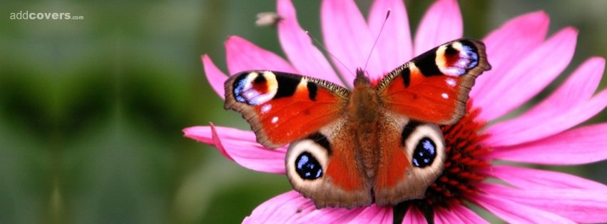 Butterfly and Pink Flower {Flowers Facebook Timeline Cover Picture, Flowers Facebook Timeline image free, Flowers Facebook Timeline Banner}