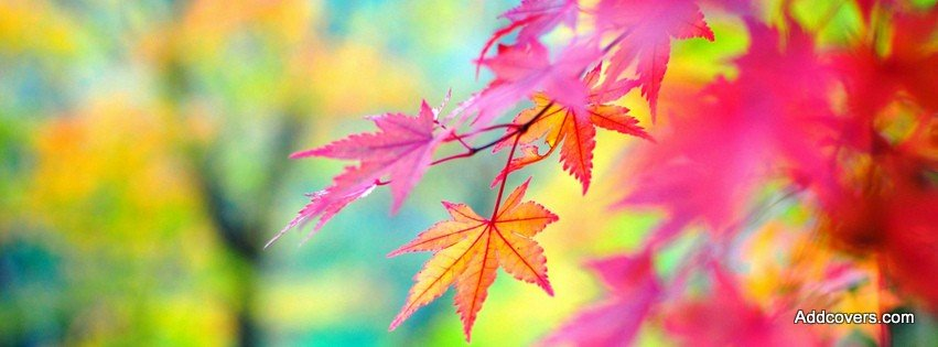 Fall Colors Facebook Covers for Timeline.