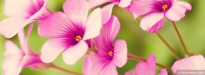Purple Flower Facebook Cover