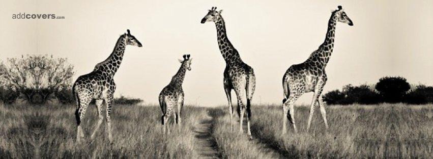 Amazoncom Jay At Play Janimals Giraffe Med Toys amp Games