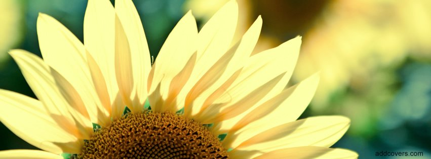 Free Flowers Facebook Timeline Cover