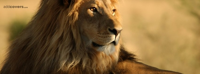 Mighty Lion {Animals Facebook Timeline Cover Picture, Animals Facebook Timeline image free, Animals Facebook Timeline Banner}