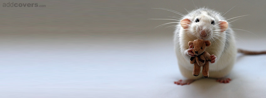 Cute Rat Facebook Covers
