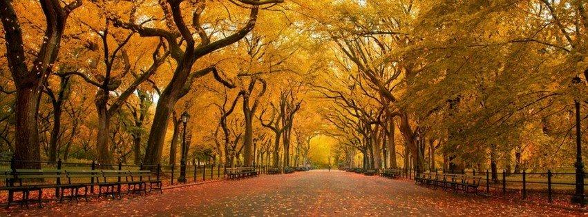 Autumn in the Park {Scenic & Nature Facebook Timeline Cover Picture, Scenic & Nature Facebook Timeline image free, Scenic & Nature Facebook Timeline Banner}