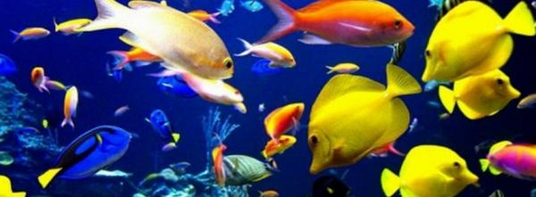 Colorful Fishes