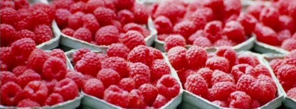 Farmer's Market Raspberries