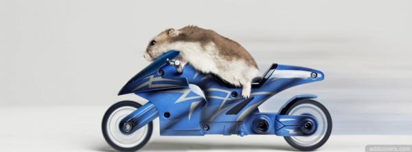 Mouse on Motorcycle