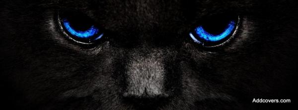 Black Cats with Blue Eyes