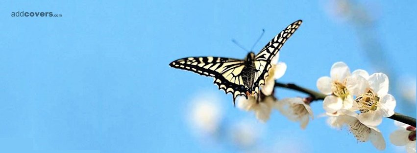 Buttefly & White Flower {Flowers Facebook Timeline Cover Picture, Flowers Facebook Timeline image free, Flowers Facebook Timeline Banner}