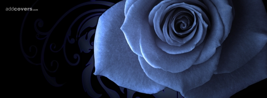 Blue Rose {Flowers Facebook Timeline Cover Picture, Flowers Facebook Timeline image free, Flowers Facebook Timeline Banner}