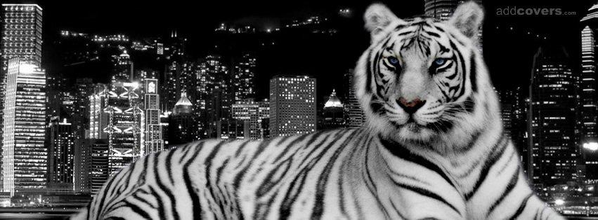 Tiger City Night {Animals Facebook Timeline Cover Picture, Animals Facebook Timeline image free, Animals Facebook Timeline Banner}