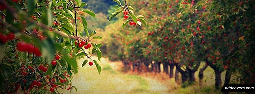 Cherries {Scenic & Nature Facebook Timeline Cover Picture, Scenic & Nature Facebook Timeline image free, Scenic & Nature Facebook Timeline Banner}