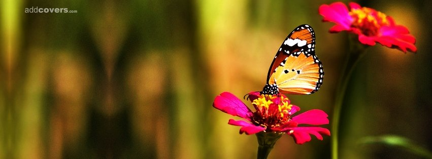 Butterfly & Flower {Flowers Facebook Timeline Cover Picture, Flowers Facebook Timeline image free, Flowers Facebook Timeline Banner}
