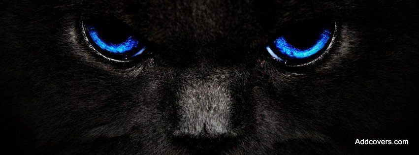Black Cats with Blue Eyes {Animals Facebook Timeline Cover Picture, Animals Facebook Timeline image free, Animals Facebook Timeline Banner}